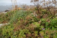 Strandflora med Angelica, Leymus og Geranium