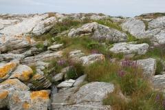 Strandflora i Sola kommune II