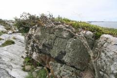 Sorbus aucuparia på Myklebust