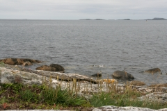 Strandflora i Sola kommune I